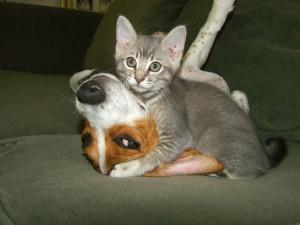 funny animals cat dog funny animals crying funny animals make