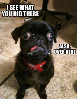 hilarious dog funny animal pic share this funny animal picture on ...