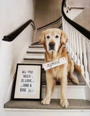 All You Need is Love . . . And a Dog