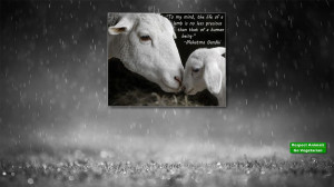 Respect animals - go vegetarian HD Wallpaper 1920x1080