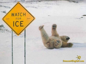 Funny Polar bear pictures: watch for ice