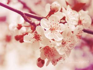 Friends Make Life Blossom