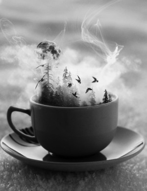 ... beautiful birds moon Magic forest fantasy tea calm Serenity illusion