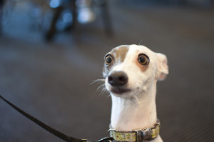 Surprised Dog Face Gallery for surprised dog