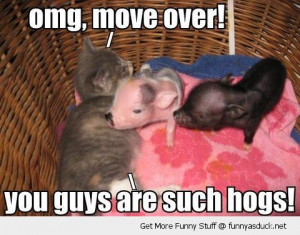 funny-cute-kitten-pigs-piglets-bed-move-over-cat-hogs-pics
