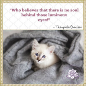 quotes about pet loss cat pet loss quotes fat cat cat pet loss quotes ...