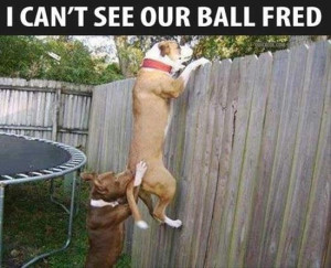 Funny Jokes / Pictures Details | Category: Funny Animals // Tags ...