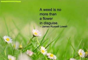 Weed Flower Best Of Gardening Quote
