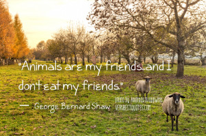 Vegetarian Quotes - Animals are my friends...and I don't eat my ...