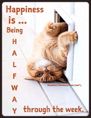 Wednesday Humor | Happy Hump Day | Mid week blues | Animal Humor | Cat ...