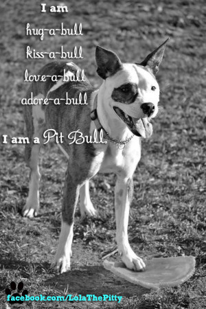 ... rio from save a bull rescue in minnesota he is also a pit bull mix