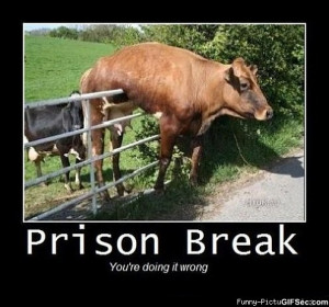 Prison Break - Funny Pictures, MEME and Funny GIF from GIFSec.com