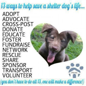 Ways you can help a Shelter Animal!