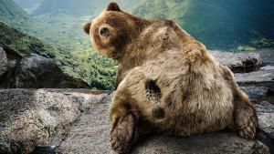 Funny Bear - Wallpaper #31498