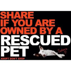 Home | rescue me quotes Gallery | Also Try: