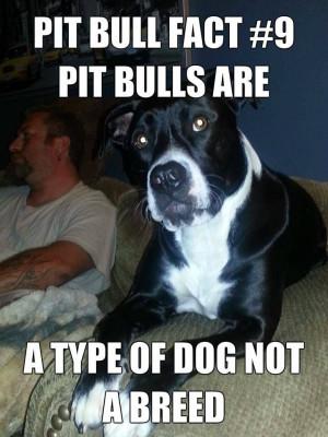 Cute Pit Bull Quotes. QuotesGram
