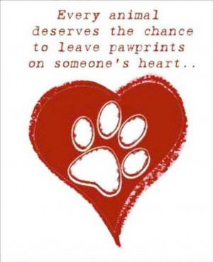 Adopt a pet! Please, there are so many in shelters waiting on death ...