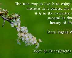 Funny Quote About Life By Laura Ingalls Wilder