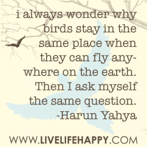 always wonder why birds stay in the same place when they can fly ...