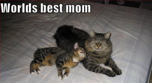Funny Mothers Day Quotes:Mother's Day is a time of joy and happiness ...