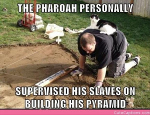 Cat The Kind And Must Rule Over His Slaves Funny Pictures