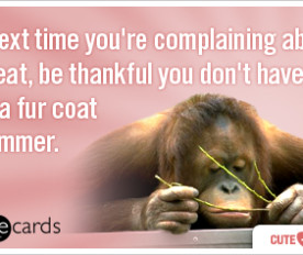 summer-heat-fur-complain-cute-therapy-ecards-someecards