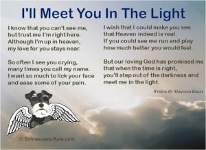 pet-loss-poem-meet-me-in-the-light-maureen-bauer.jpg