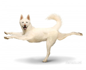 ... Dogs wall calendar features a variety of pooches in various yoga poses