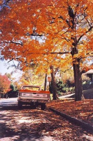 Harvest & Autumn