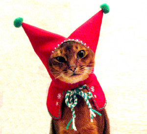 cat-elf-hood-christmas-costume.jpg#cats%20at%20christmas%20479x437