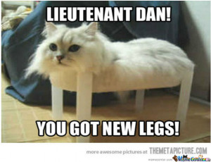 Just A Funny Forrest Gump Cat.
