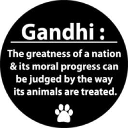 Gandhi Quote Car Magnet