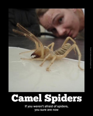 Tags: Afraid , Camel Spider , Spider