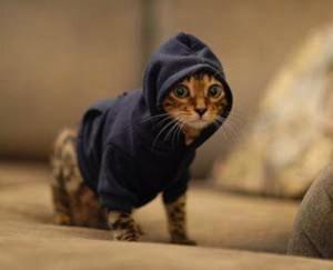 cat, clothes, cute, hood, hoodi, kitty
