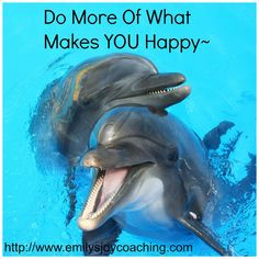... dolphinarium, bats, dolphins, people, dubai travel, travel dolphin