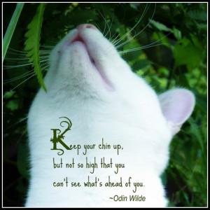Cat Quotes & More
