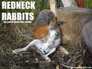 redneck rabbit is a bad rabbit!