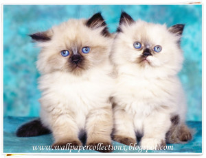 Viewing Gallery For - Cute Cat Quotes