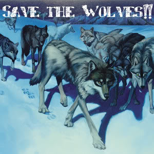 Save-the-wolves-save-the-wolves-foundation-25443828-300-300.jpg (300 ...