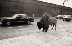 Fay Godwin | Bison at Chalk Farm: White Magic, Photography Exams ...