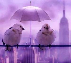 Cute birds under umbrella share cute things at www.sharecute.com