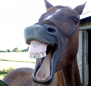 Horse Laugh by Bill Gracey . We have no idea what this horse is trying ...