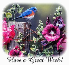 Have a great week! nature flowers bird gif wildlife days of the week ...