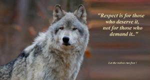 sabiduría de lobo wallpaper