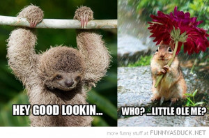 smooth sloth animal hey good looking squirrel flower who me funny pics ...