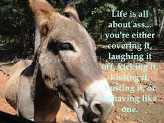 INSPIRATIONAL SAYINGS QUOTES DONKEY MULE JACKASS LIFE ANIMAL 5X7 PHOTO ...