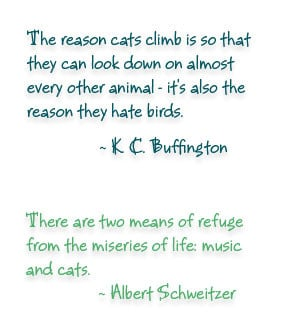 Few Quotes About Cats The Life Blog