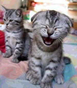 Ich bin eine lachende Katze und lache mich krumm und schief...
