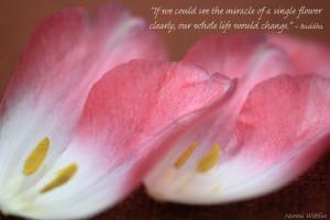 tulips quotes