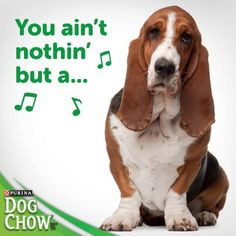 Funny Basset Hound Sayings A hound dog... sing it :). pinned from ...